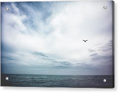 Seagull Flying Over Lake Michigan Acrylic Print by Rebecca Nelson