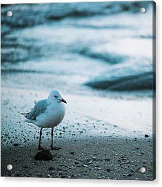 Acrylic Print featuring the photograph Seagull On The Beach. by Rob D