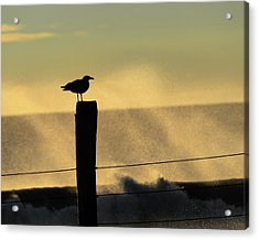 Seagull Silhouette On A Piling Acrylic Print