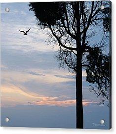 Seagull Sunset At Catawba Acrylic Print
