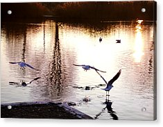 Seagulls In The Morning Acrylic Print