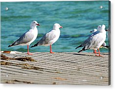 Acrylic Print featuring the photograph Seagulls On The Beach. by Rob D