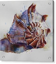 Seashell Swirl Acrylic Print