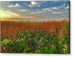 Seaside Meadow Acrylic Print