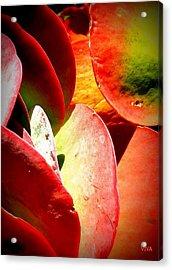 Secret  Life  Of  Plants Acrylic Print