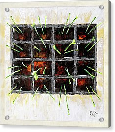 Seedlings Acrylic Print