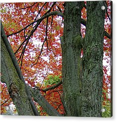 Seeing Autumn Acrylic Print
