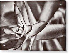 Sensual Succulent II Acrylic Print