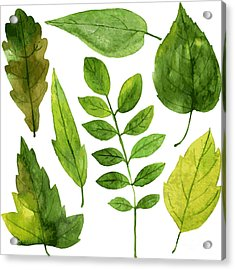 Set Of Green Leaves Drawing By Acrylic Print