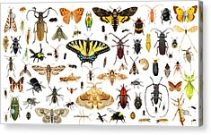 Set Of Insects On A White Background Acrylic Print