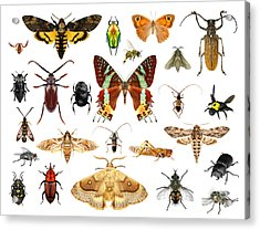 Set Of Insects On White Background Acrylic Print