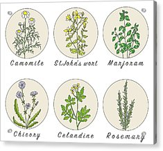 Set Of Spices, Medicinal Herbs And Acrylic Print