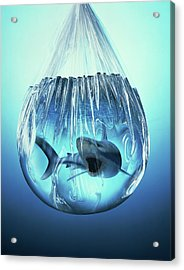 Shark In A Bag Acrylic Print by Ray Massey