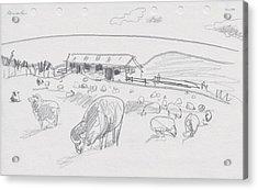 Sheep On Chatham Island, New Zealand Acrylic Print