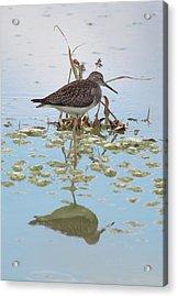 Shorebird Reflection Acrylic Print
