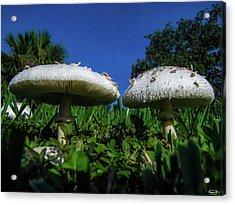 Shrooms Acrylic Print