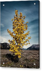 Acrylic Print featuring the photograph Sign Of The Times by Fred Denner