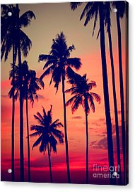 Silhouette Coconut Palm Tree Outdoors Acrylic Print