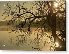 Silhouette Of A Tree By The River At Sunrise Acrylic Print