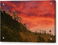 Silhouette Of Conifer Against  Seacoast  Acrylic Print