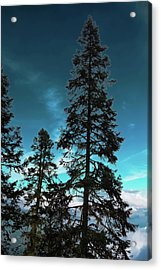 Silhouette Of Tall Conifers In Autumn Acrylic Print