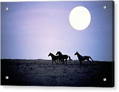 Silhouette Of Wild Horses Running In Acrylic Print by Jake Rajs