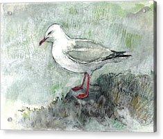 Silver Gull Acrylic Print