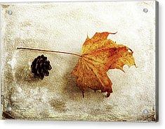 Acrylic Print featuring the photograph Simple And Beautiful by Randi Grace Nilsberg