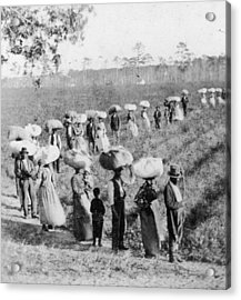 Slaves In The Cotton Fields Acrylic Print by Fotosearch