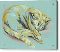 Sleeping Tabby Kitten Acrylic Print