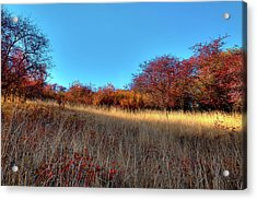 Acrylic Print featuring the photograph Sliver Of Sunlight by David Patterson