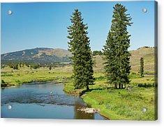 Slough Creek Acrylic Print