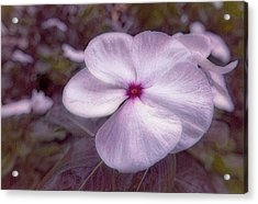 Small Flower Acrylic Print