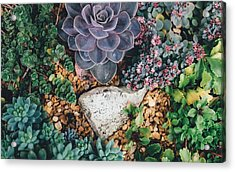 Acrylic Print featuring the photograph Small Succulent Garden by Top Wallpapers