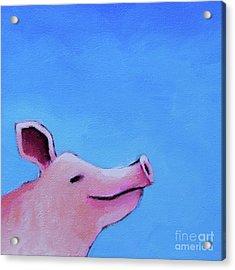 Smiling Pig Acrylic Print