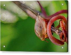 Snails Pace Acrylic Print