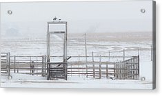 Acrylic Print featuring the photograph Snow And Corral 01 by Rob Graham