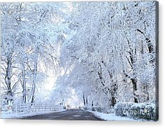 Snow Covered Trees After A Snow Acrylic Print