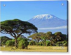 Snow On Top Of Mount Kilimanjaro In Acrylic Print