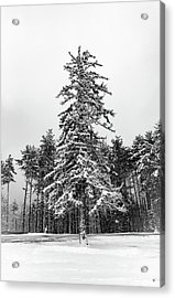 Snow Tree Acrylic Print