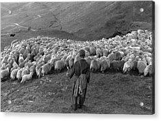Snowdonia Sheep Acrylic Print by Grace Robertson