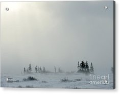 Snowstorm In Tundra Landscape With Acrylic Print
