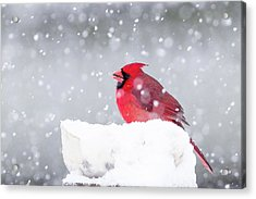 Acrylic Print featuring the photograph Snowy Cardinal by Lori Coleman