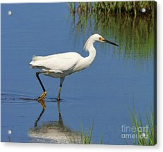 Acrylic Print featuring the photograph Snowy Egret by Debbie Stahre