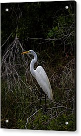 Snowy Egret On A Hot Summer Day Acrylic Print