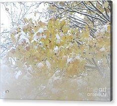 Acrylic Print featuring the photograph Snowy Maple by PJ Boylan