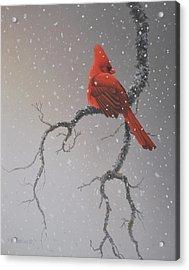 Snowy Perch Acrylic Print