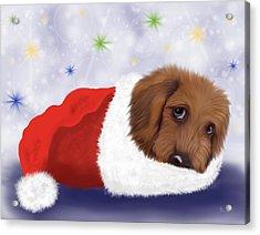 Snuggle Puppy Acrylic Print