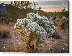 Soft And Inviting....not Acrylic Print