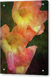 Soft Blush 2975 Idp_2 Acrylic Print